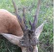 Tarnamérai Tarnamente Hunting Co. - Central Hungary