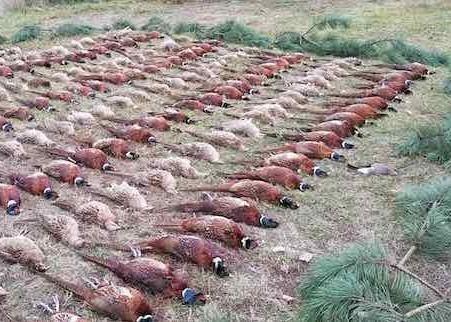Kisduna Pheasant Nature Conservation Hunting Company