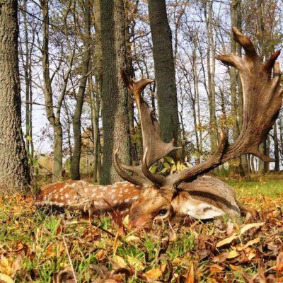 Szikra Hunting Assoc. - Tiszavasvári, Eastern Hungary