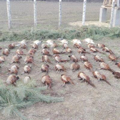 Tápiószecsői Megoldás Hunting Co. - Central Hungary